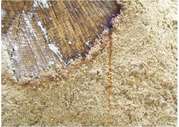Sous couche isolante en phase aqueuse pour bois tanniques - PRIMAX